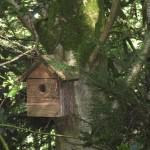 Bird Hide